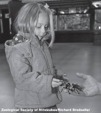 girl-holding-tarantula-spider-zoological-society-of-milwaukee